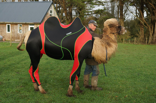 Lymed_Camel_compression_suit